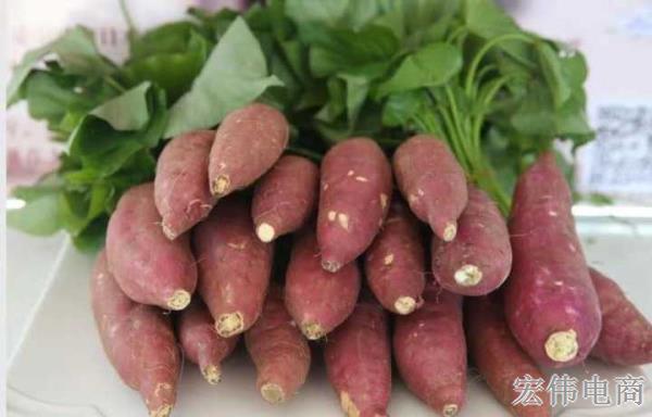教你怎么挑红薯 好吃的地瓜芋头 (10).jpg