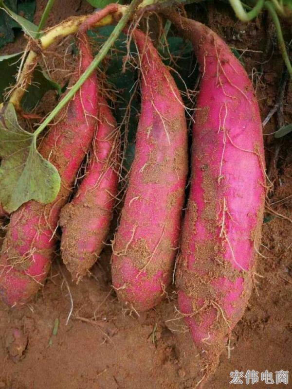 教你怎么挑红薯 好吃的地瓜芋头 (5).jpg