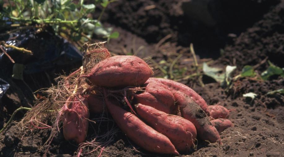 这几种红薯的吃法,你都吃过吗?